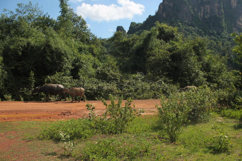 On the road, Thakkek Laos royalty free stock image