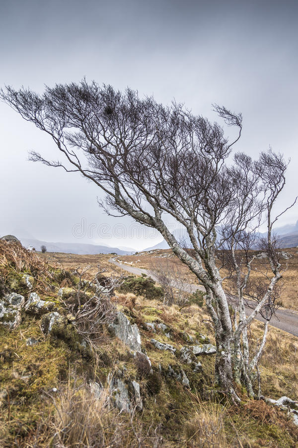 Free Road To Achiltibuie In The Highlands. Royalty Free Stock Photography - 86332807