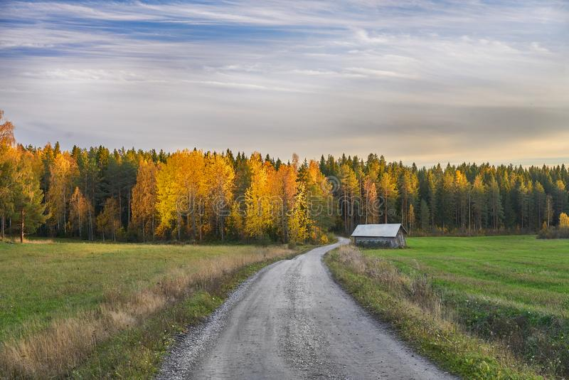 Road to Autumn. Road to colorful autumn during golden hour royalty free stock photos