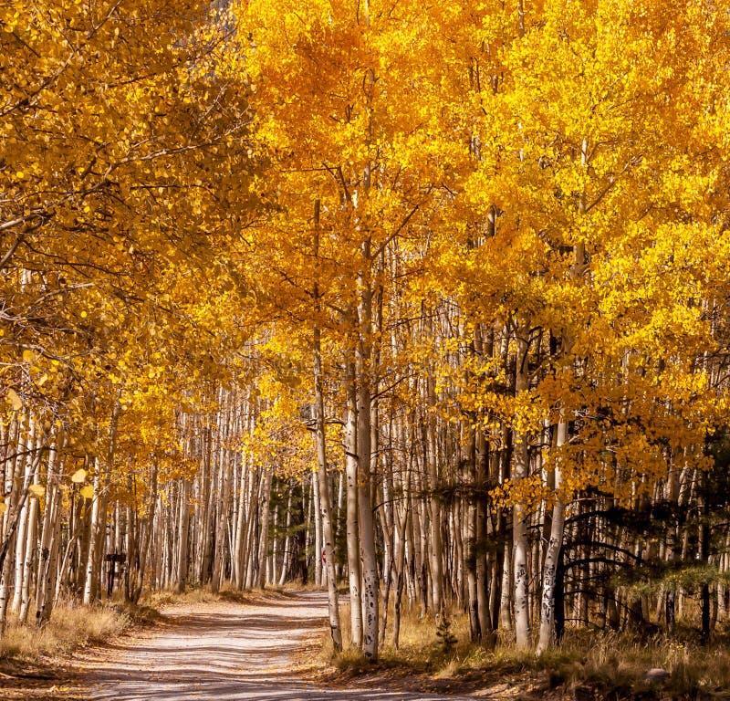 Road to Autumn Aspens royalty free stock photos