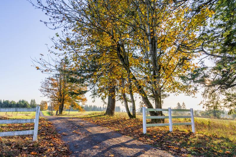 Road to autumn landscape of sunlit foliage of trees behind a woo. Road leading into the distance beyond the horizon with autumn yellowed trees is like a symbol royalty free stock photography