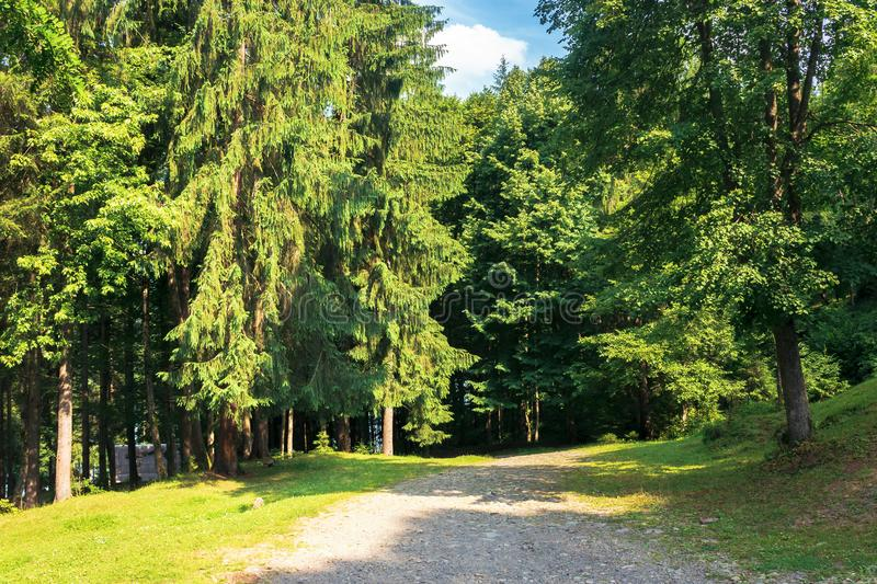Road in to the deep spruce forest royalty free stock photo