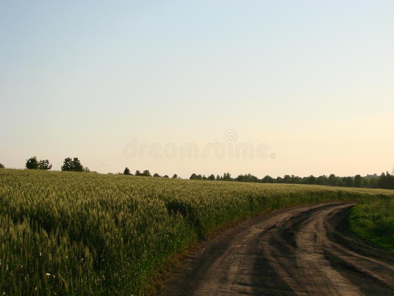 The road to the field at sunset stock photo