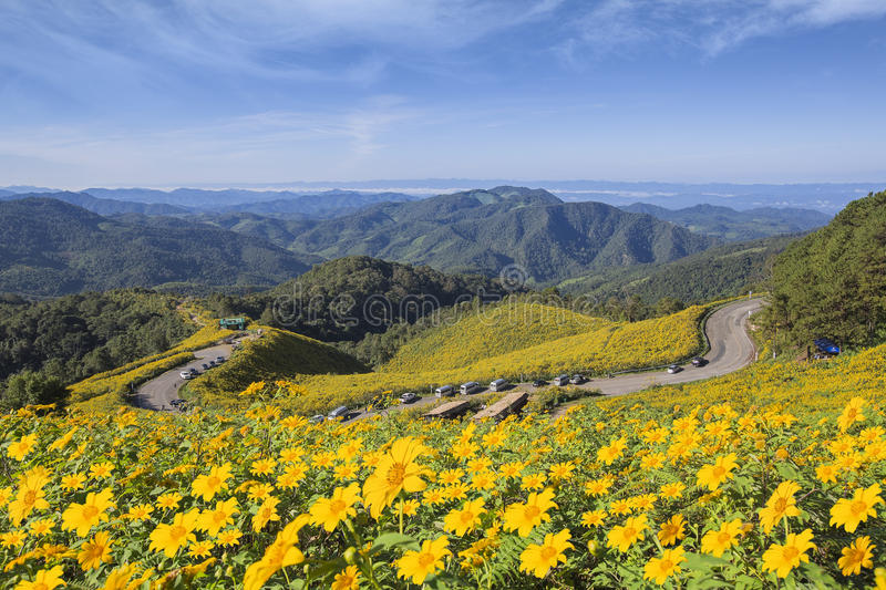 The road to the field of yellow Mexican Sunflower Weed on the mo. Untain,Mae Hong Son Province,Thailand. pang ung, pinging, Chiang Mai, pai, flower stock image