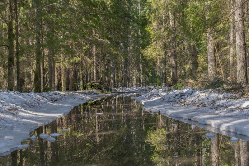 Road to the spruce forest. Along the edges of the road, the snow melts and forms a large puddle in which the forest is reflected. royalty free stock images