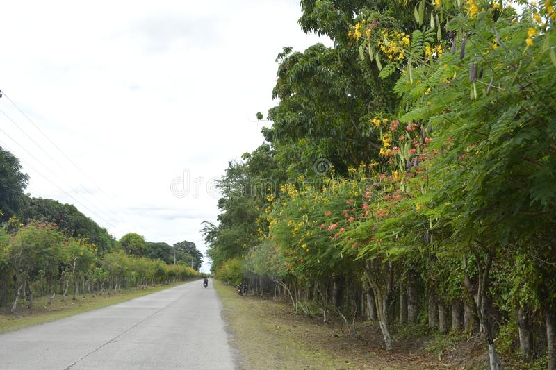Road to Guihing, Hagonoy, Davao del Sur, Philippines. This photo shows the road going to Guihing, Hagonoy, Davao del Sur, Philippines stock images