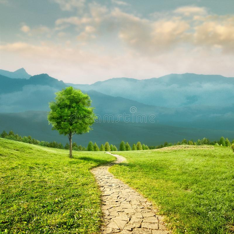 Road to health. Seasonal natural backgrounds. With transparent air and beauty meadow stock photos
