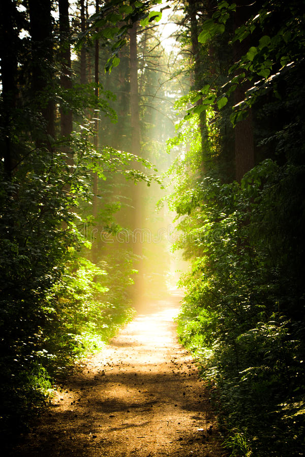 Road to heaven royalty free stock photo