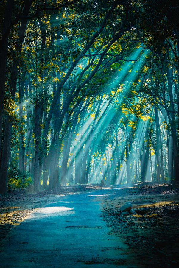 Road to home. Sunrays with Mist appearing. Backlight sunrays with mist appearing at Jim Corbett National Park stock photo