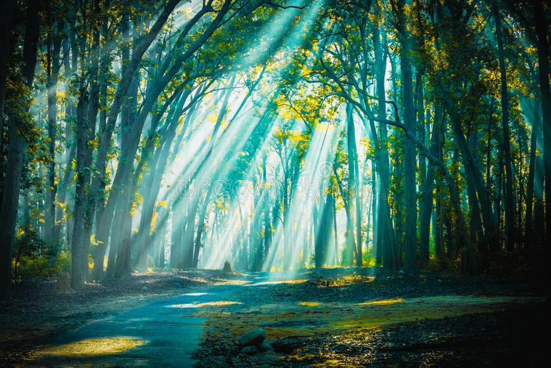 Road to home. Sunrays with Mist appearing. Backlight sunrays with mist appearing at Jim Corbett National Park stock photos