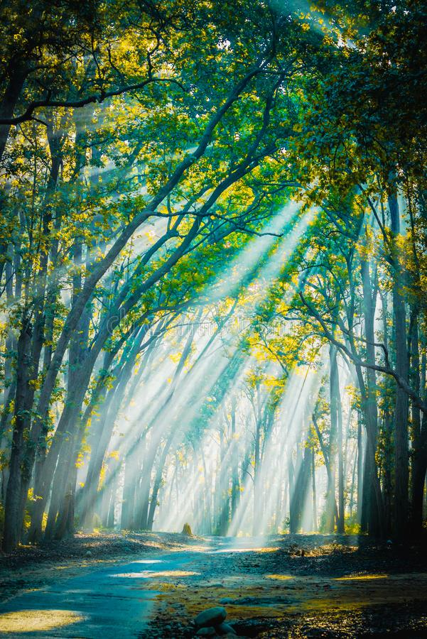 Road to home. Sunrays with Mist appearing. Backlight sunrays with mist appearing at Jim Corbett National Park royalty free stock image