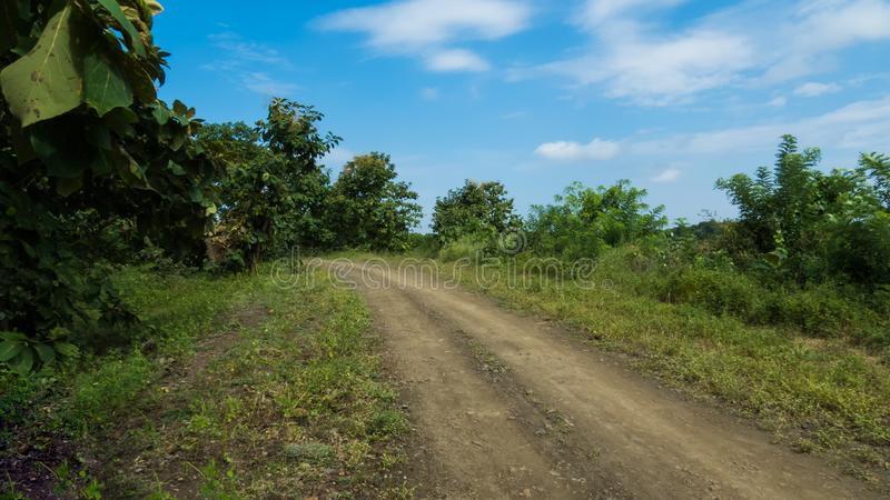 Road to the jungle with greenery and blue sky stock images