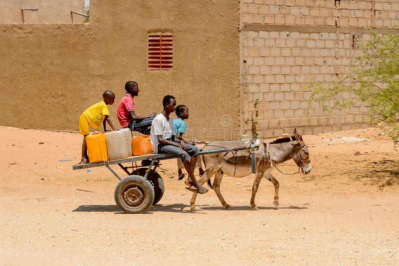 Unidentified Senegalese boy rides a cart with a donkey. stock photo