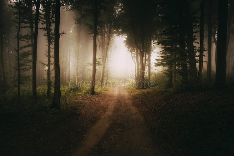 Road to the light in dark mysterious forest stock photo