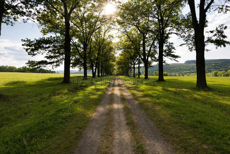 Road to Mohonk Mountain House from the Testimonial Gateway in New Paltz New York. Tree lined trail through a green pasture at sunset stock images
