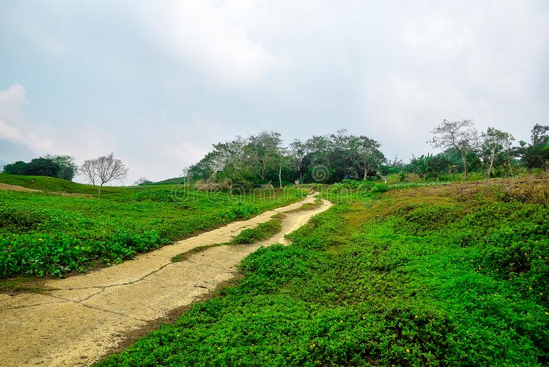 Mountain road with tress and grass landscape. A road to mountain with and grass landscape in a foggy background and cloudy skies landscape stock photography