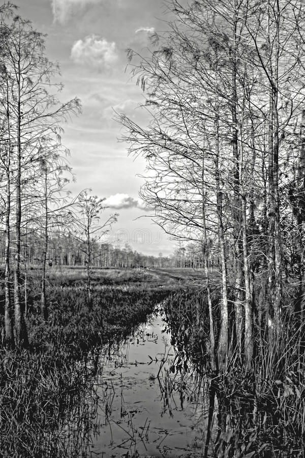Road to Nowhere Everglades National Park royalty free stock image
