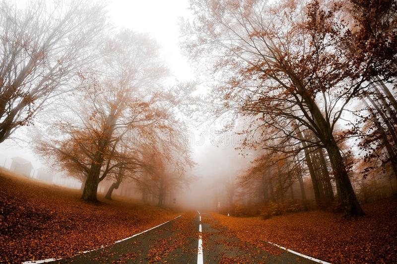 Road to fog royalty free stock photos