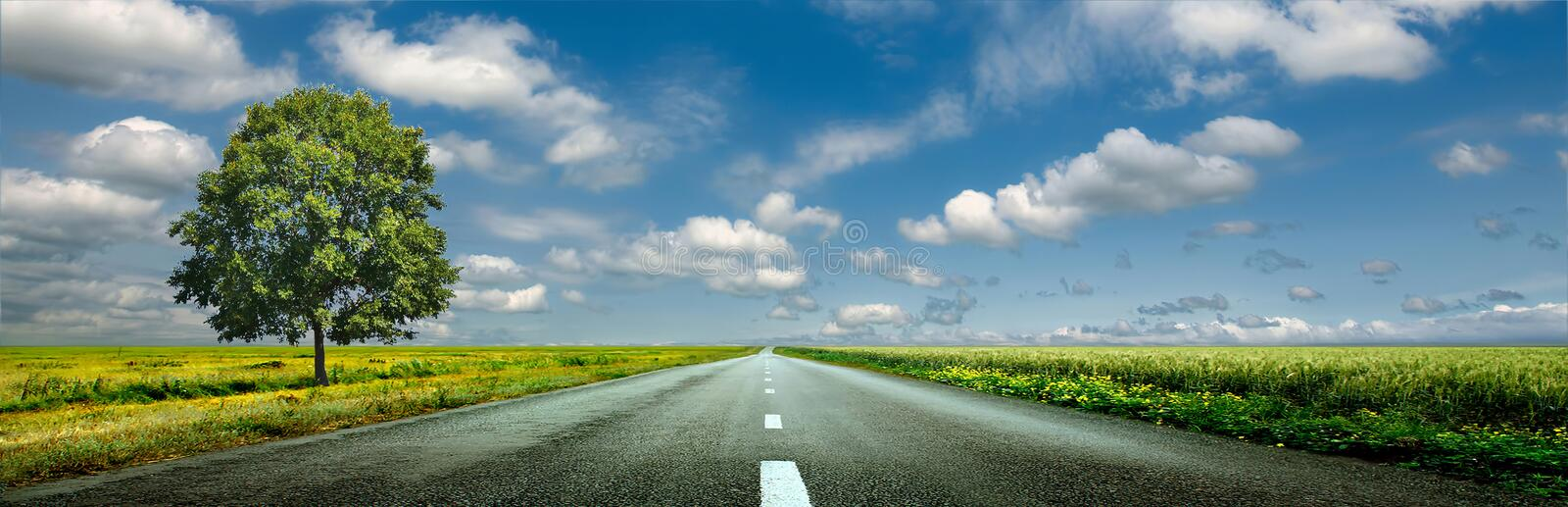 Asphalt road, fields of wheat royalty free stock images