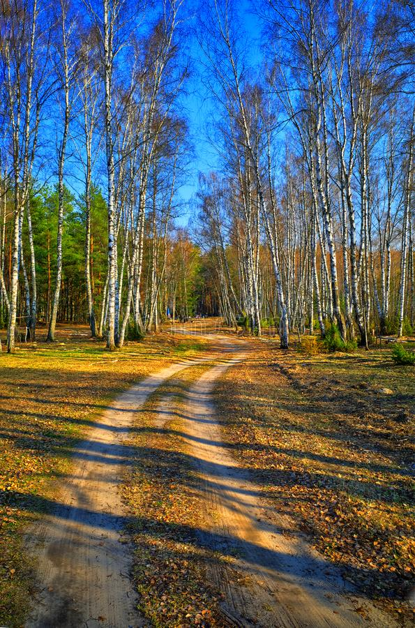 Road to summer: dramatic spring birch forest landscape background stock images
