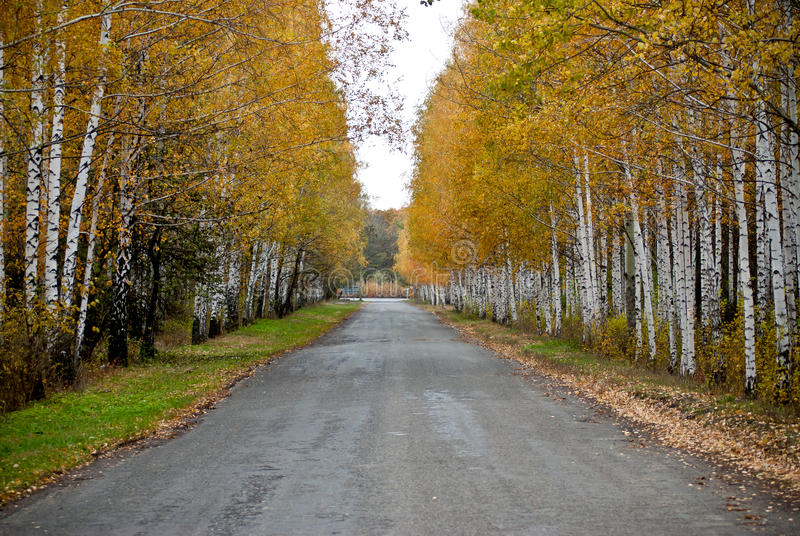 Download Road to a wood stock image. Image of asphalt, mountain - 20646645