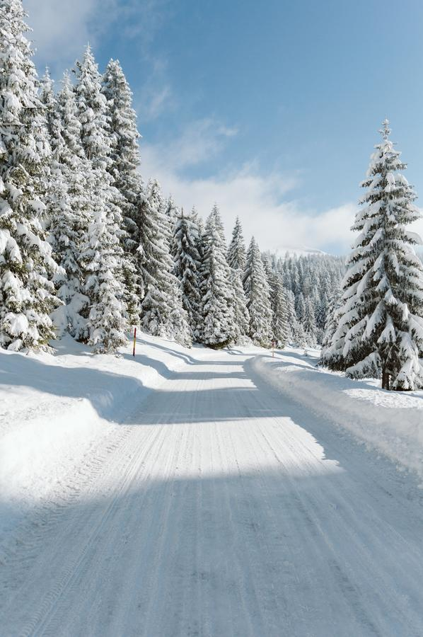 A road on top of a snowy mountain with pines and a clear blue sky on a sunny day royalty free stock image