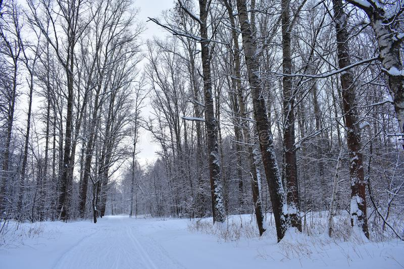 Road track, passing through a winter forest. Winter wood dormant stock photography