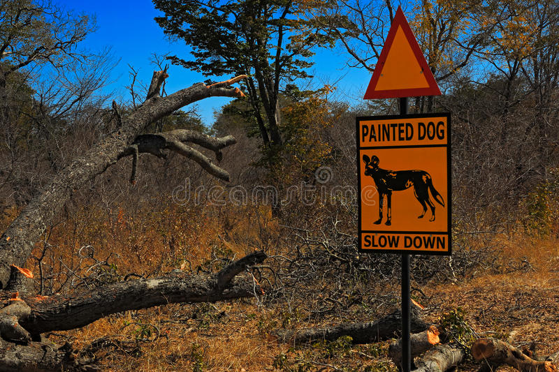 Road traffic sign with animal, Painted dog, slow down. Widlife dangerous in Africa. Busch near the road with Painted dog. royalty free stock photo