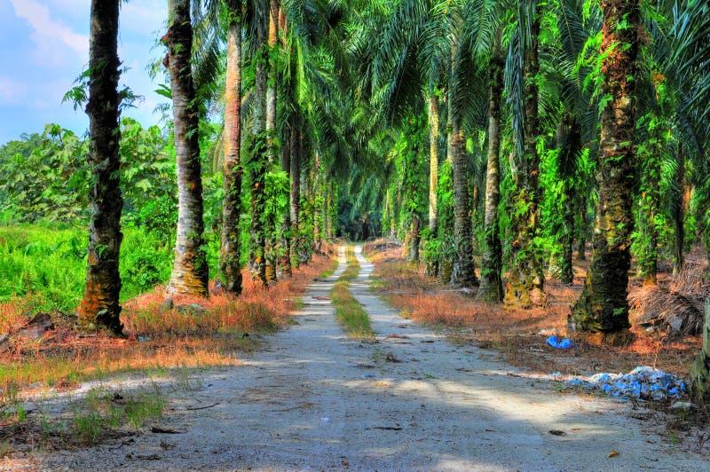 Download Road Trail stock photo. Image of ingress, malaysia, land - 4285012