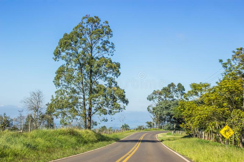 Road and the tree royalty free stock photos