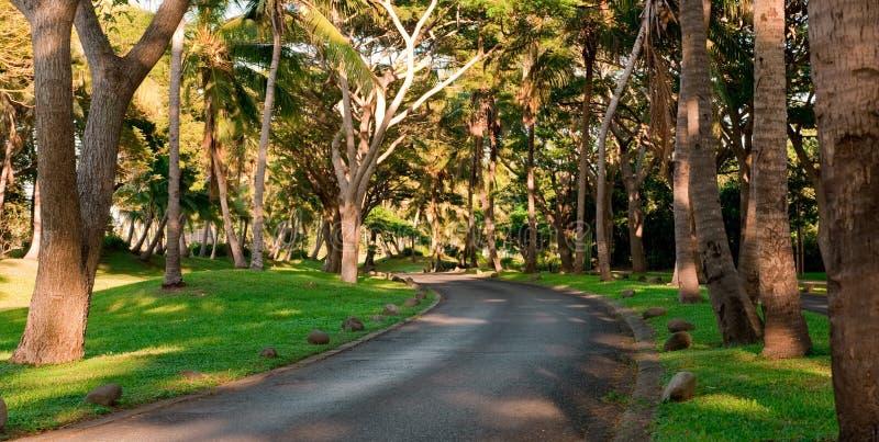 Road through the trees royalty free stock photo