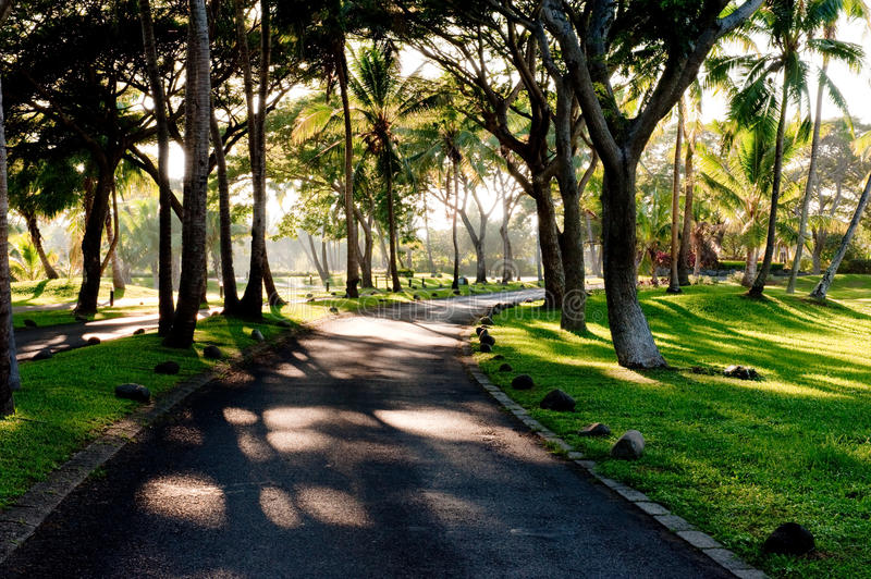 Road through the trees royalty free stock photography