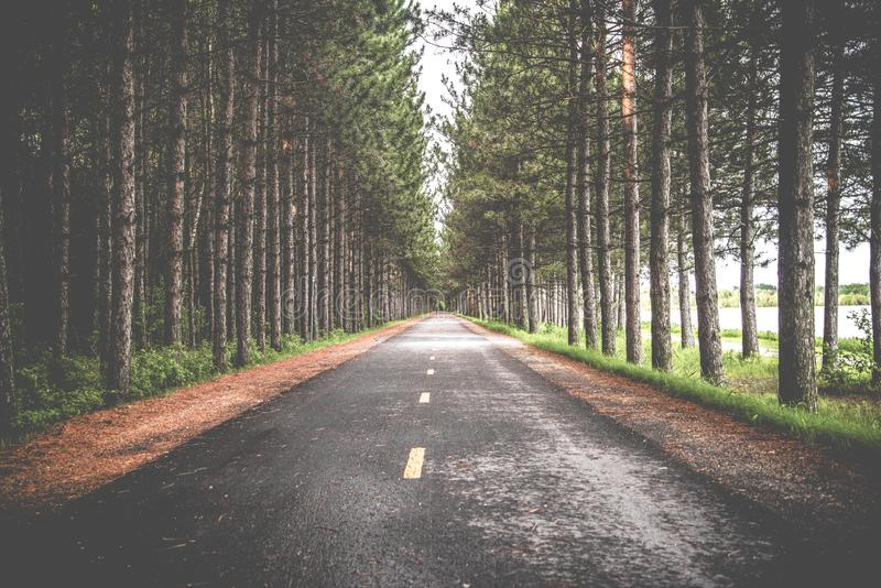 Road with Trees royalty free stock photo