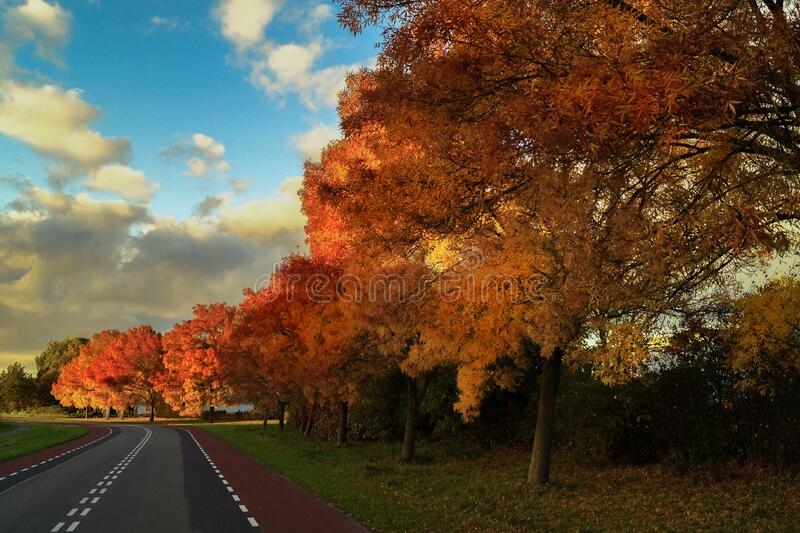 Road with trees in Autumn colors royalty free stock photography