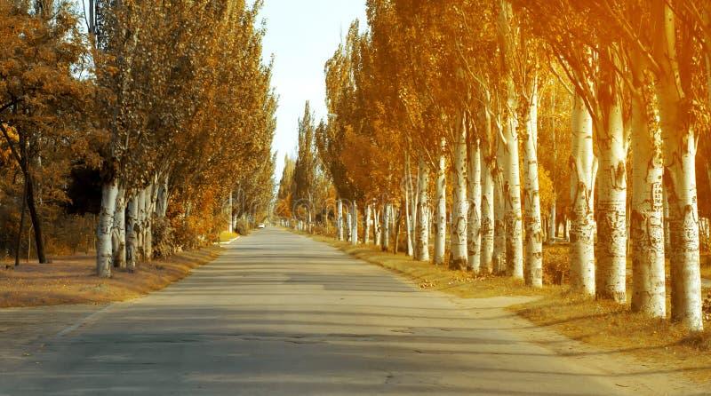 Road trees autumn yellow nature royalty free stock photo