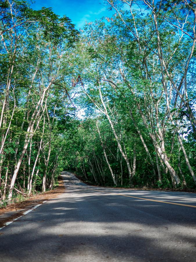 Road with trees on both sides. Summer Country Road With Trees Beside Concept stock photo