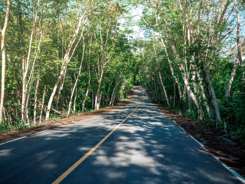 Road with trees on both sides. Summer Country Road With Trees Beside Concept royalty free stock photography