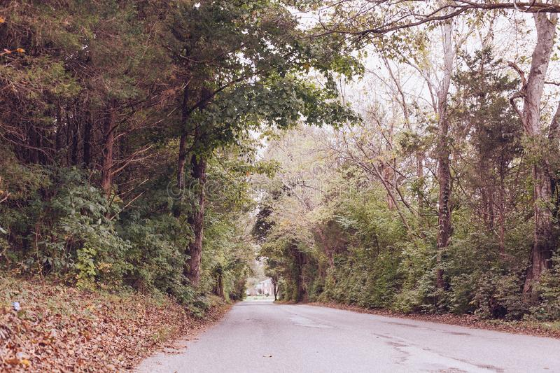 Road Trees Forest Green Tunnel royalty free stock photography