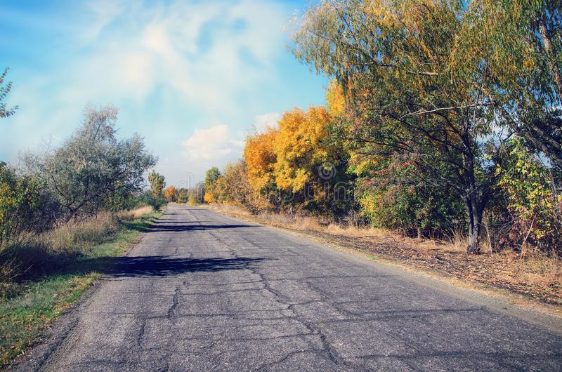 Road with trees on the roadside. The road with trees on the roadside royalty free stock photos