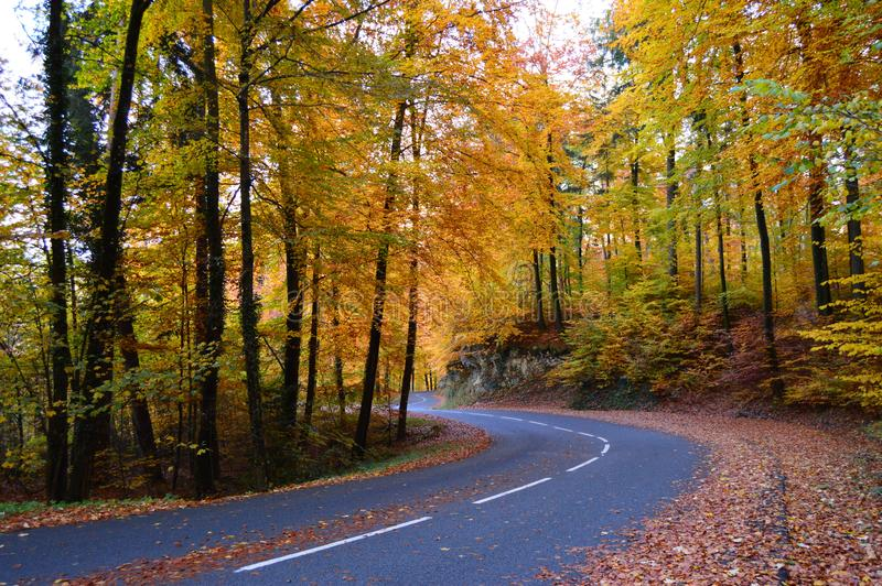 Road with trees on sides in fall time. Photo of road with trees on sides in fall time, different colors royalty free stock photo