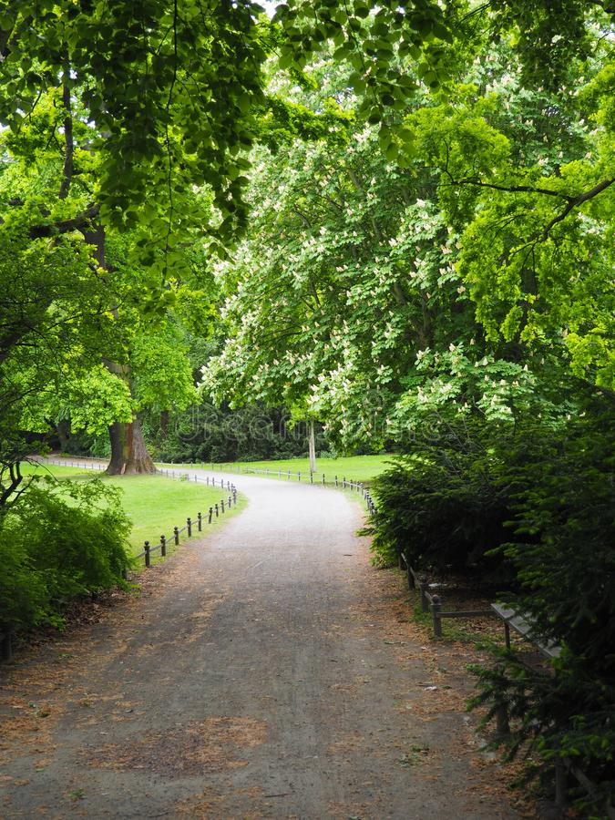 Road between trees in Tiergarten Park Berlin. Road between trees iand grass in Tiergarten Park near to the Reishstag Berlin royalty free stock images