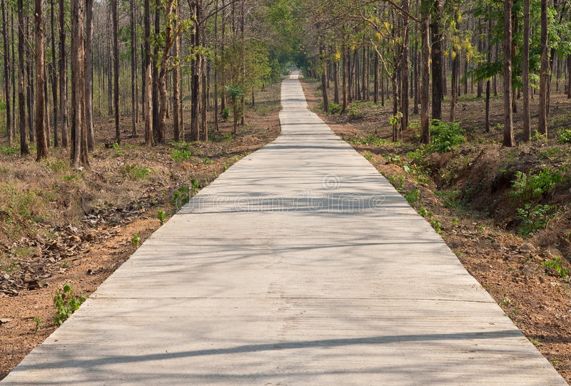 Road in tropical forest stock image