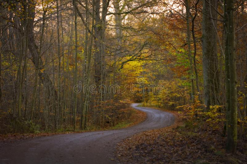 The road trough the autumn forest wallpaper royalty free stock photography