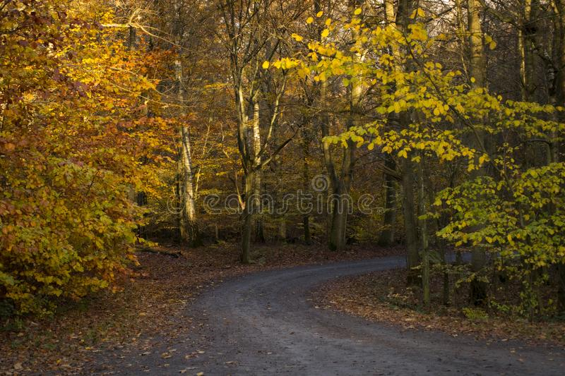 Road trough the autumn forest wallpaper royalty free stock image