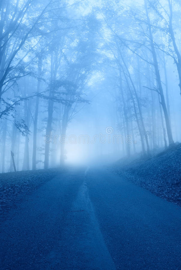 Download Road trough the forest stock image. Image of road, dream - 27143613
