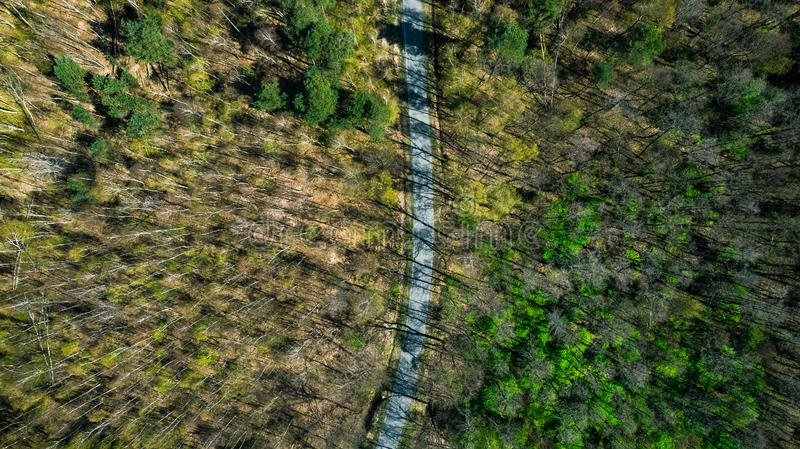 Road trough forest, trees with long shadows. Aerial drone top down view above abstract background beautiful drive environment foliage green high journey land royalty free stock photos