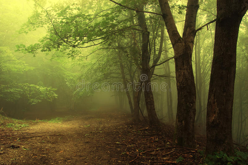 Road trough a green foggy forest royalty free stock photos