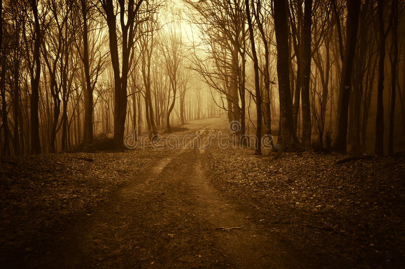 Download Road Trough A Strange Dark Forest With Fog In Late Autumn Stock Image - Image: 37184207
