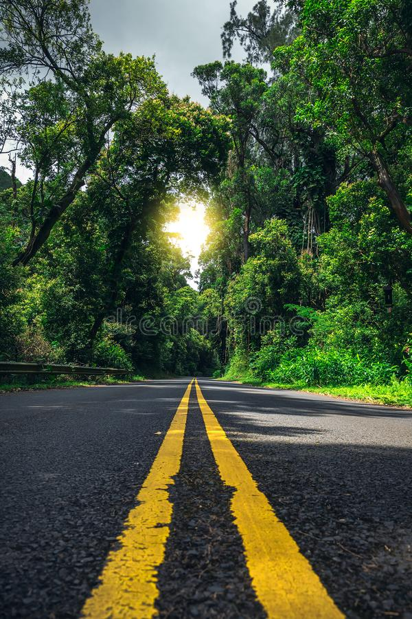 Road with two yellow lines in Hawaiian forest royalty free stock photo