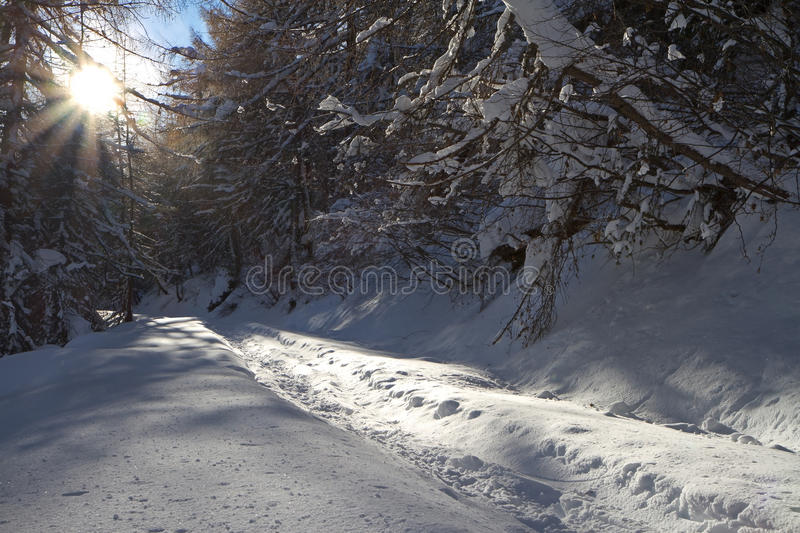 Road Under Snow Stock Photo